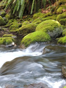 Green moss and a longer exposure give a softness to the water that rushes over the rocks in St. Andrew's Creek.
