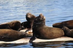 Cool sea lions!