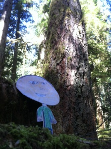 Flat Mark stands beneath a very big tree in Cathedral Grove on Vancouver Island.
